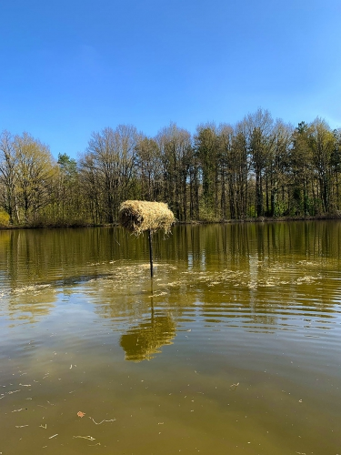 Création mise en place nichoir canard blot curage étang